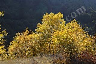 Όρος Παρνασσός